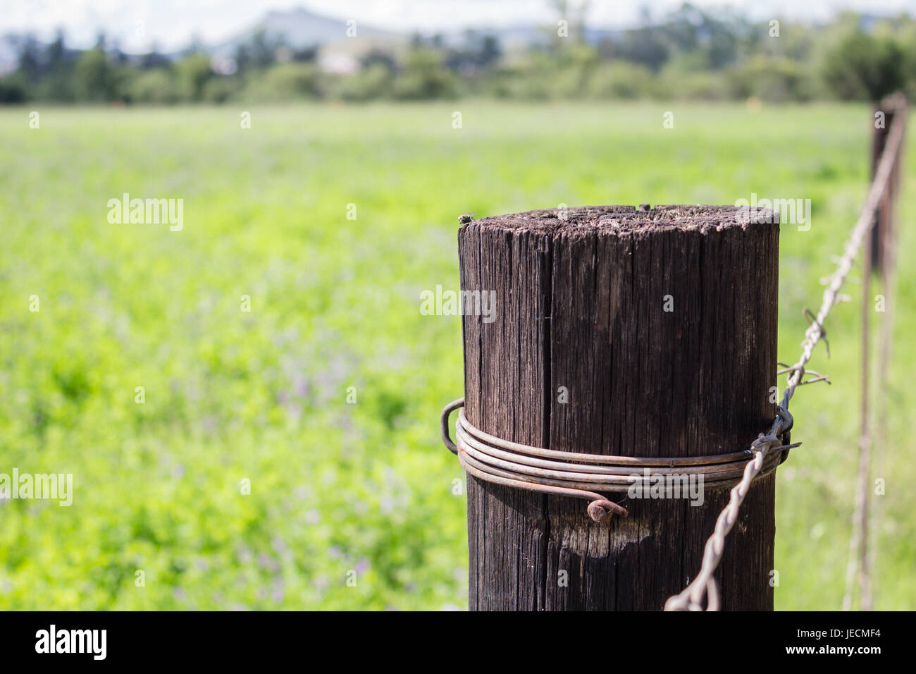 Weathered wooden fence post close up next to green meadow - conceptual background of loneliness and solitude with - Stock Image