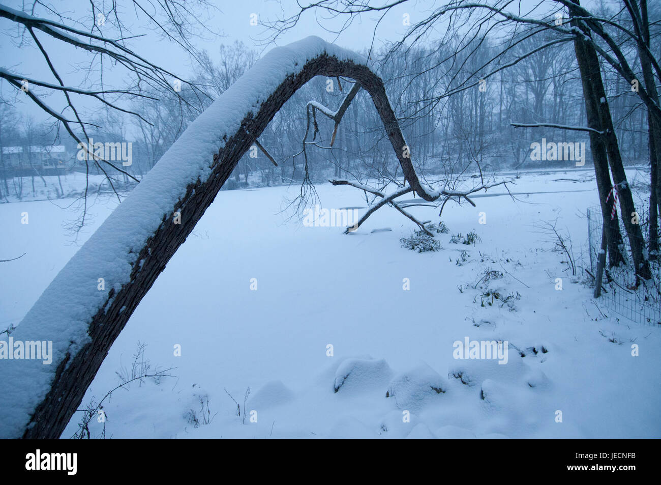 A tree bends over Churchhill Lake South during a blizzard. - Stock Image