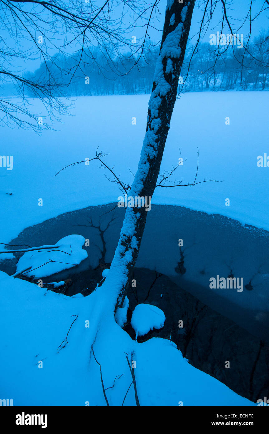 A tree leans over an open area of water over frozen Churchhill Lake South during a blizzard. - Stock Image