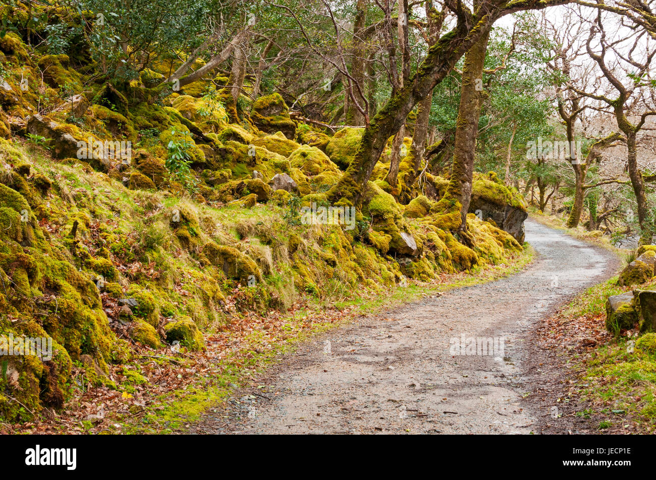 Path along lake in Glenveagh National Park, County Donegal, Ireland - Stock Image