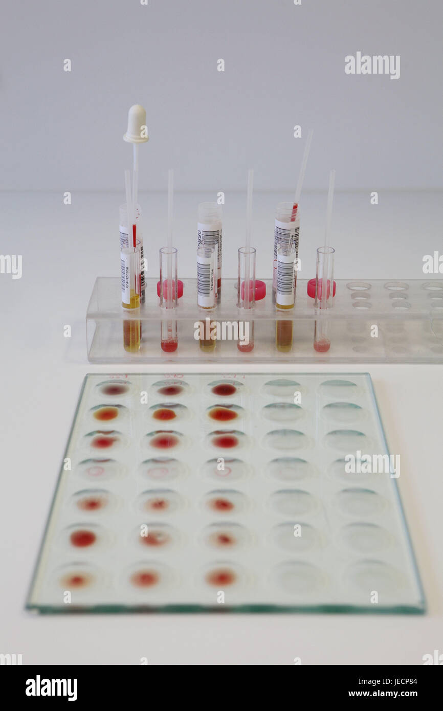 Laboratory, immune haematology, blood tests, serologische compatibility rehearsal, test series, medicine, hospital, - Stock Image