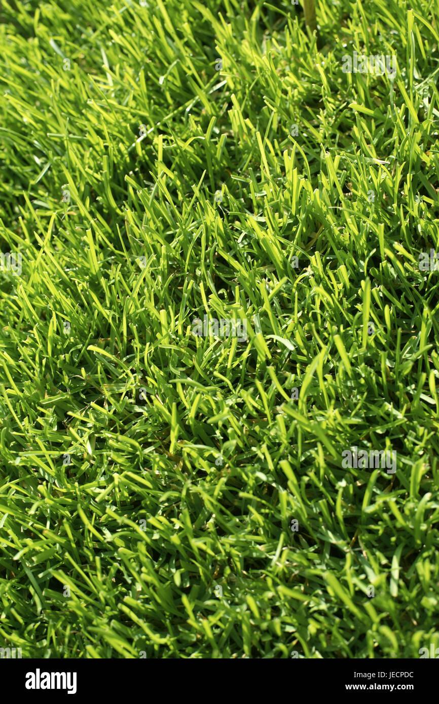 Turfs, green, medium close-up, - Stock Image