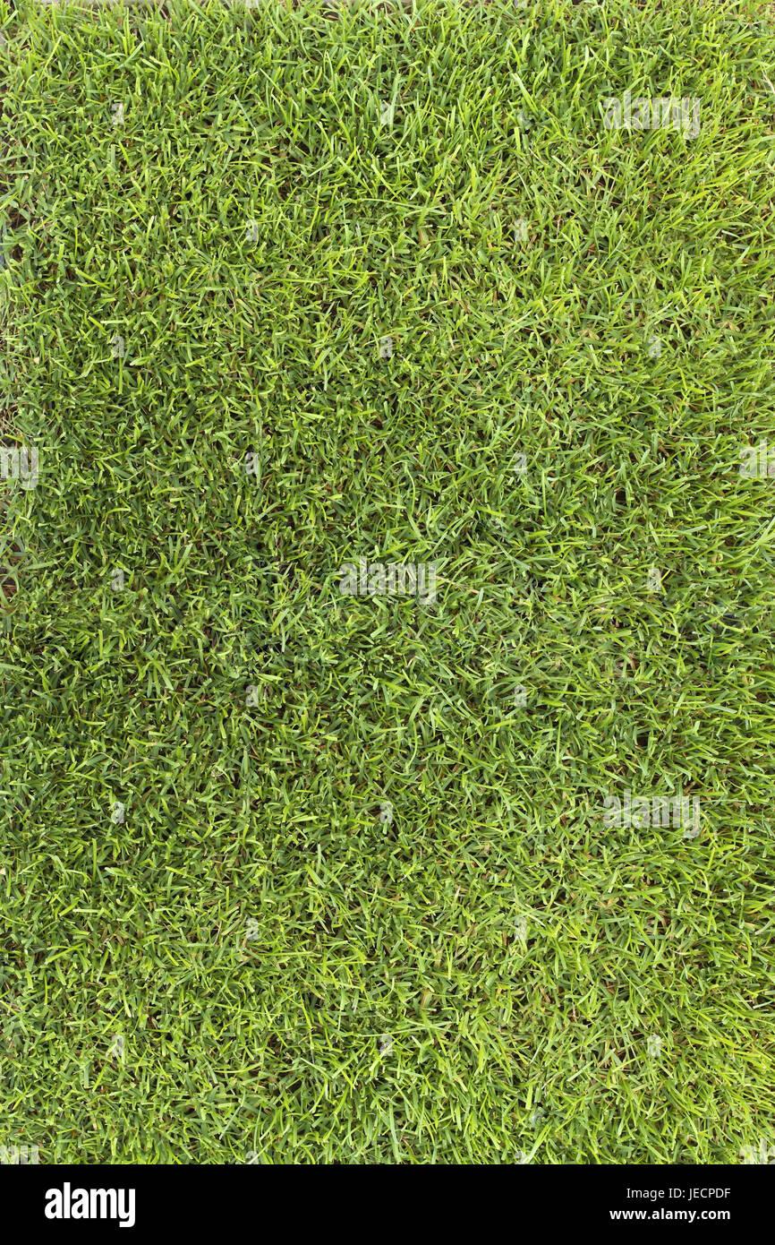 Turfs, green, - Stock Image