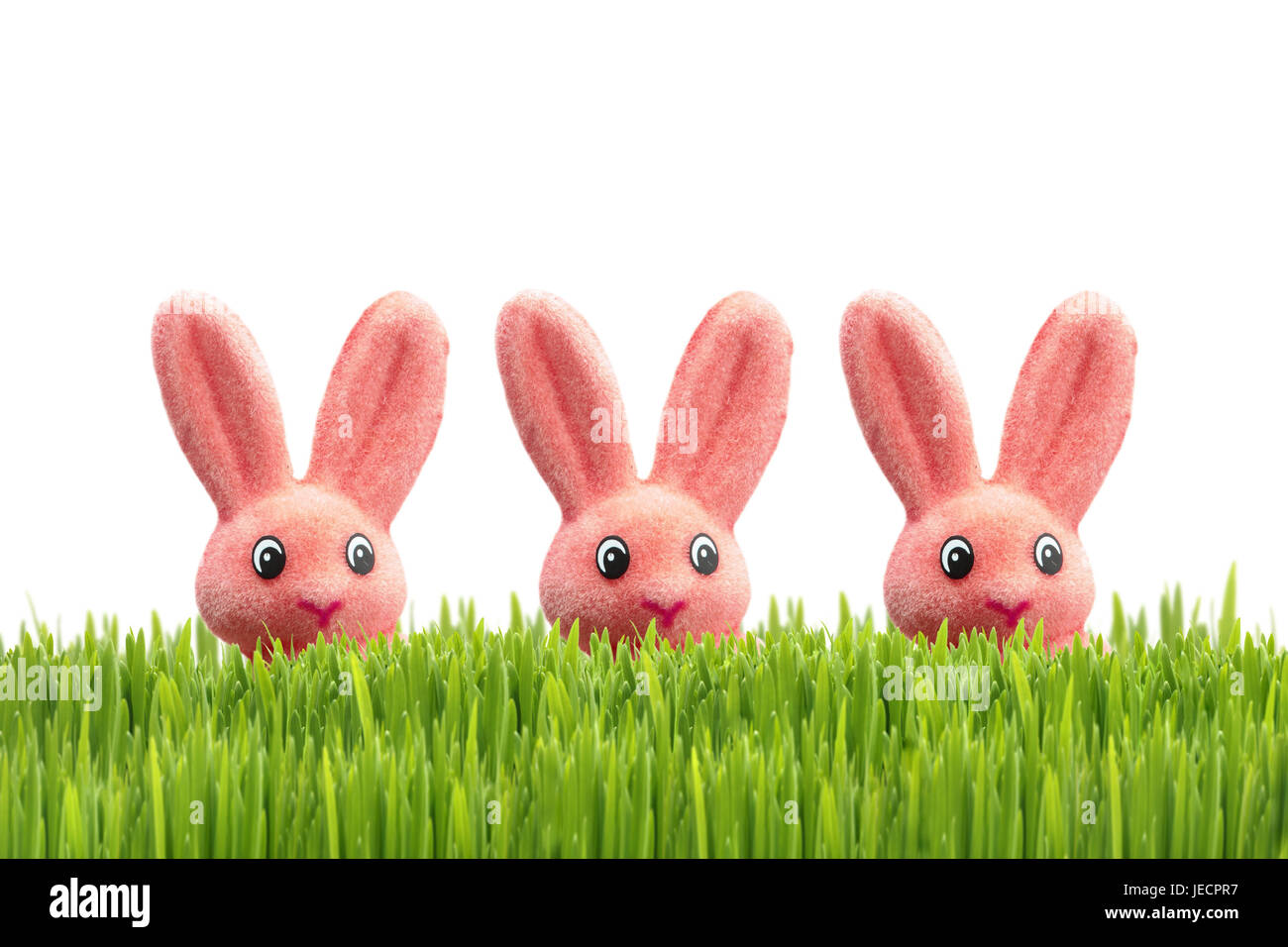 Easter, meadow, Easter bunny, pink, [M], grass, Easter feast, Easter time, Easter decoration, decoration, österlich, - Stock Image