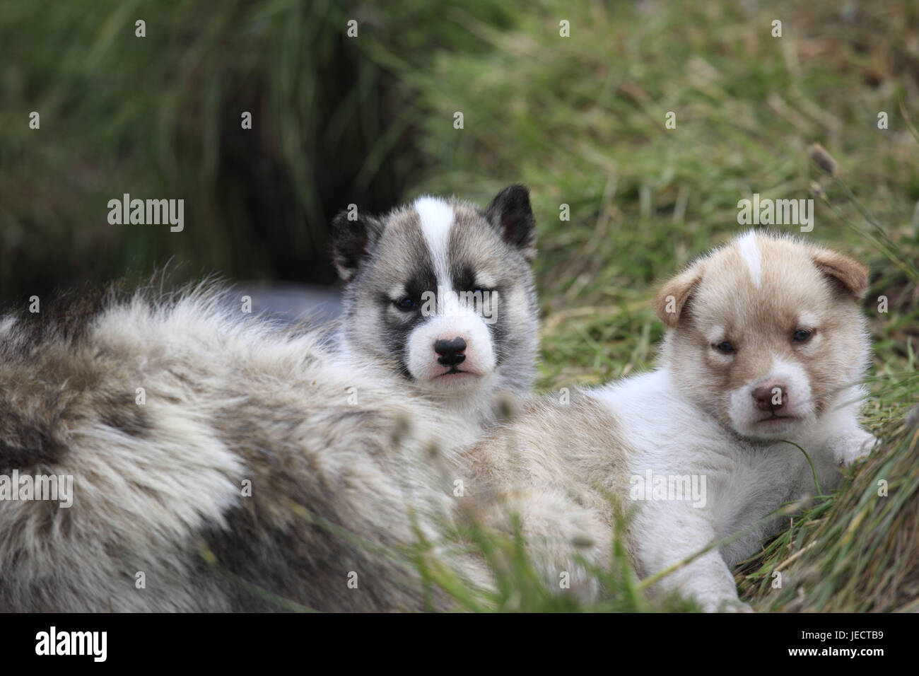 Dogs And Puppies Stock Photos & Dogs And Puppies Stock