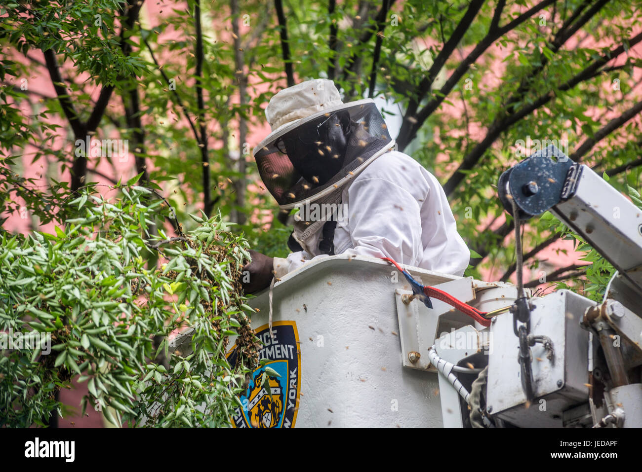 New York, NY 21 June 2017 - A Beekeeper and member of the NYPD Emergency Services Unit, removes two bee hives from - Stock Image