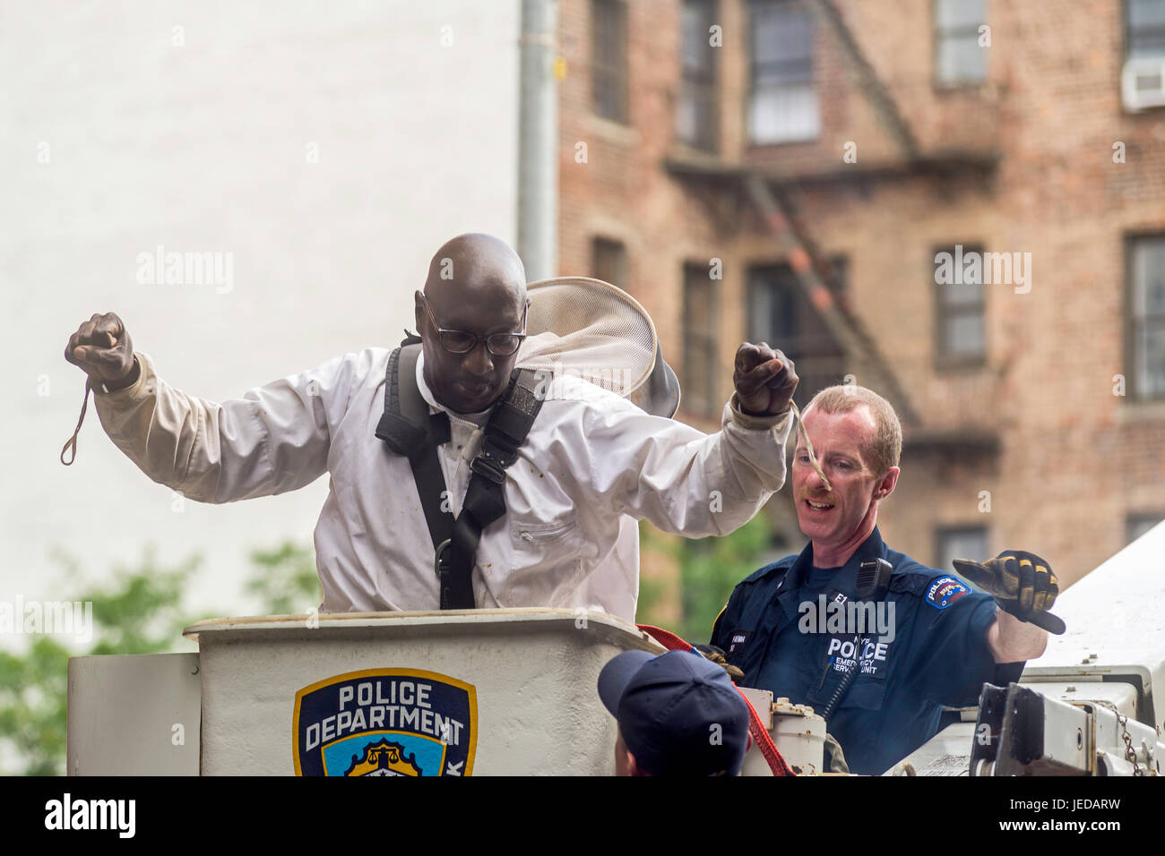 New York, NY 21 June 2017 - A Beekeeper and member of the NYPD Emergency Services Unit suits up to remove two bee - Stock Image
