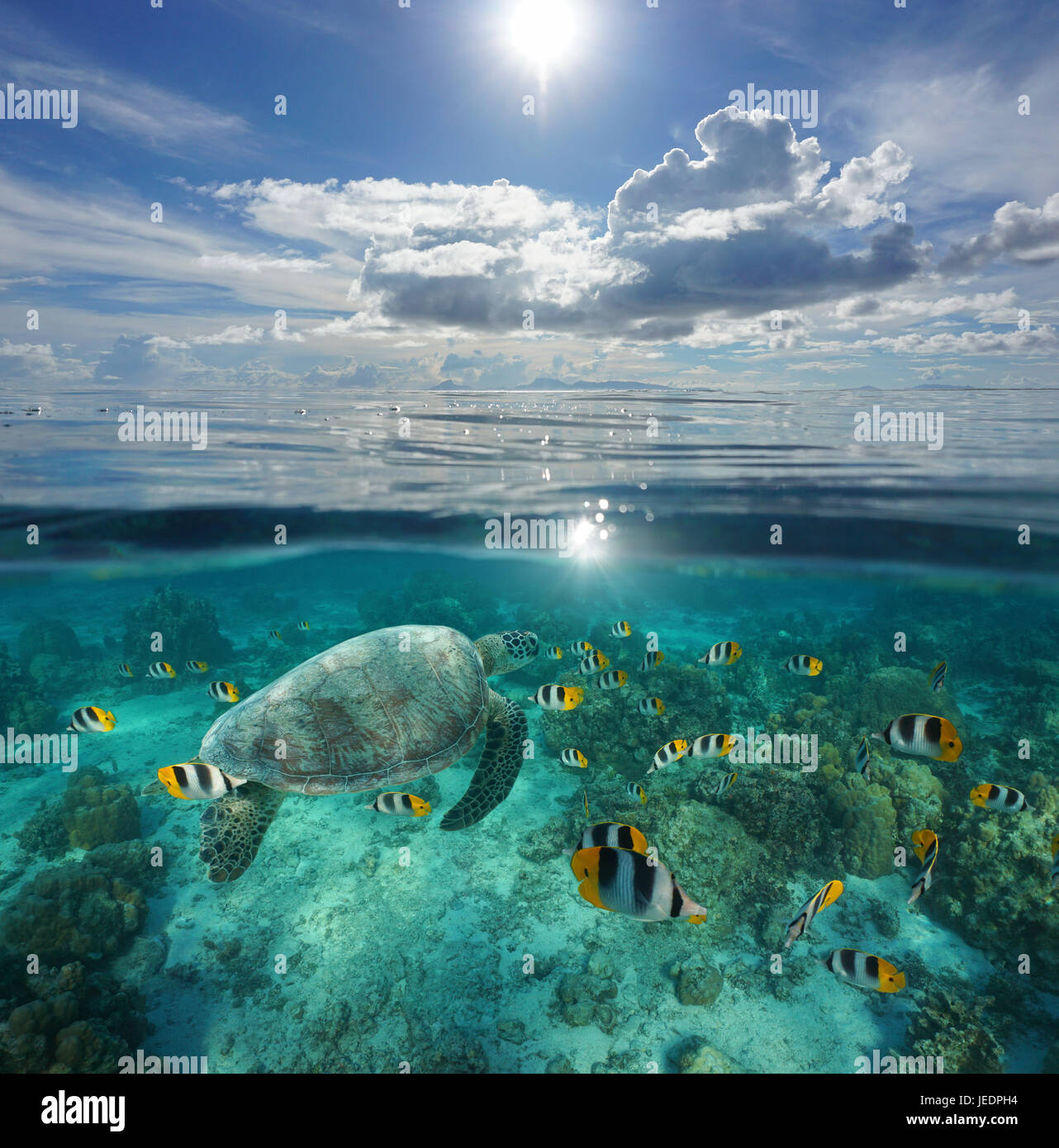 Over and under sea surface, tropical fish with a turtle underwater and an island at the horizon with cloudy blue - Stock Image