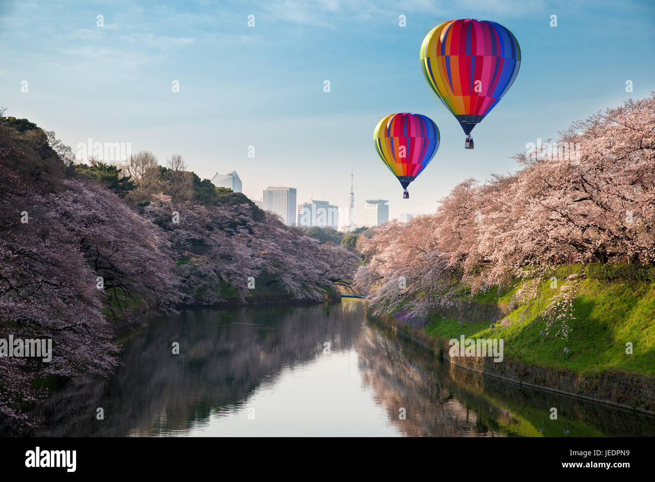 View of massive cherry blossoming in Tokyo, Japan as background. Photoed at Chidorigafuchi, Tokyo, Japan. - Stock Image