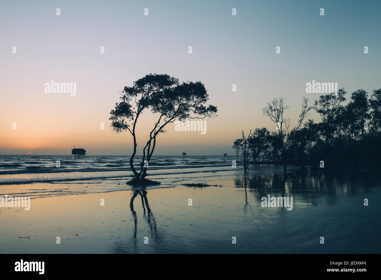 Lonely tree and house on the beach nobody abtract background Tan Thanh Beach Go Cong Viet Nam travel photo - Stock Image