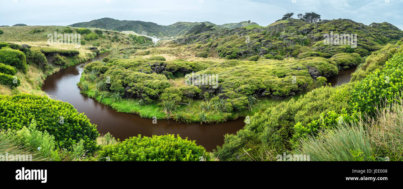 New Zealand, South Island, Tasman, warped kanuka and manuka trees at Wharariki Beach Walk - Stock Image