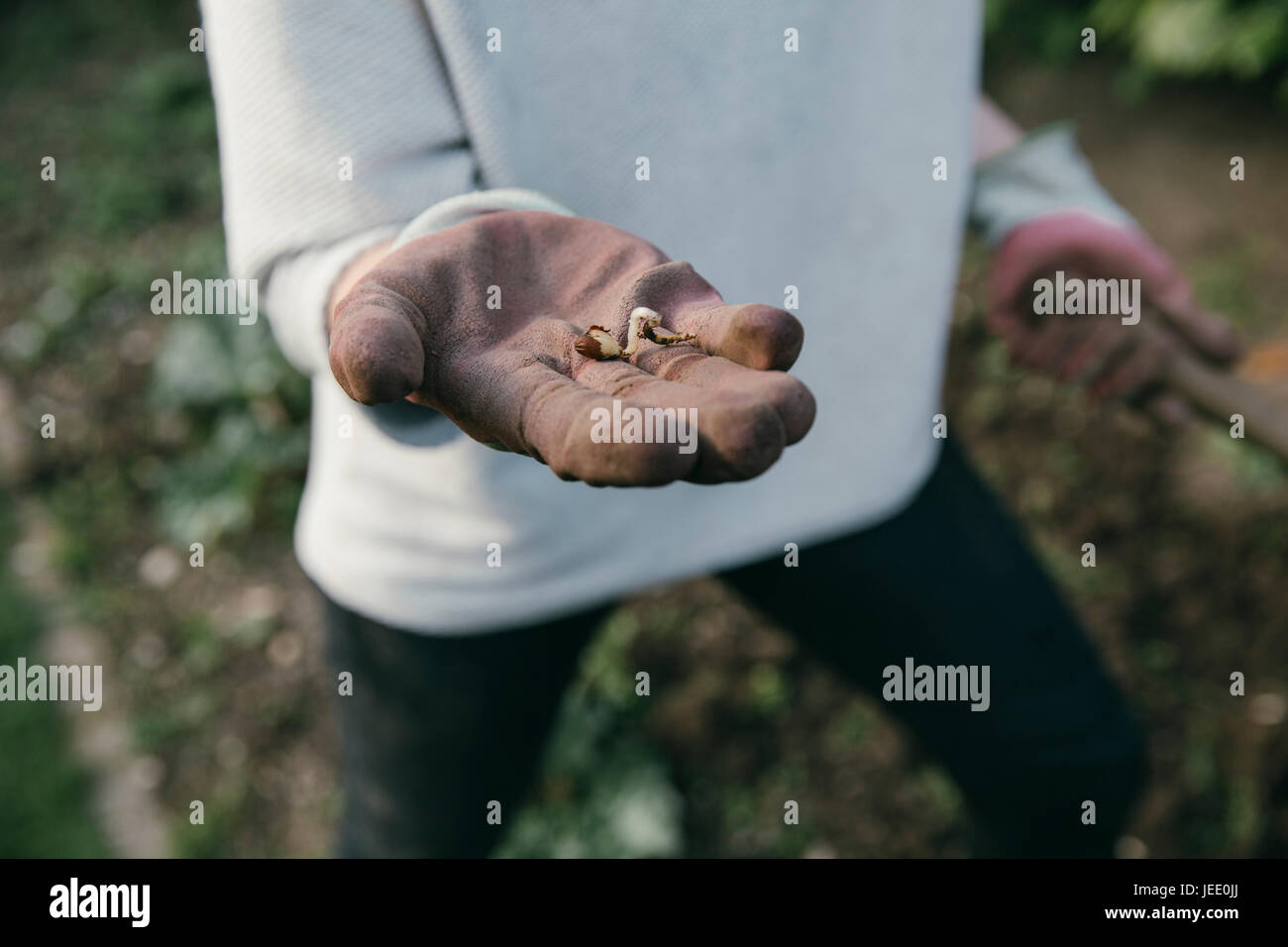 Hand of gardening woman holding a germ bud, close-up - Stock Image