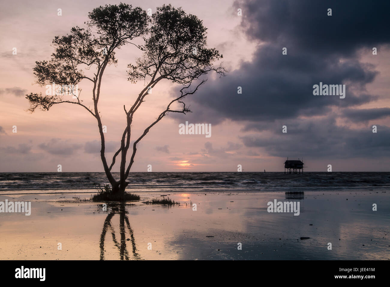 Lonely tree on Tan Thanh Beach Go Cong Tien Giang Viet Nam - Stock Image