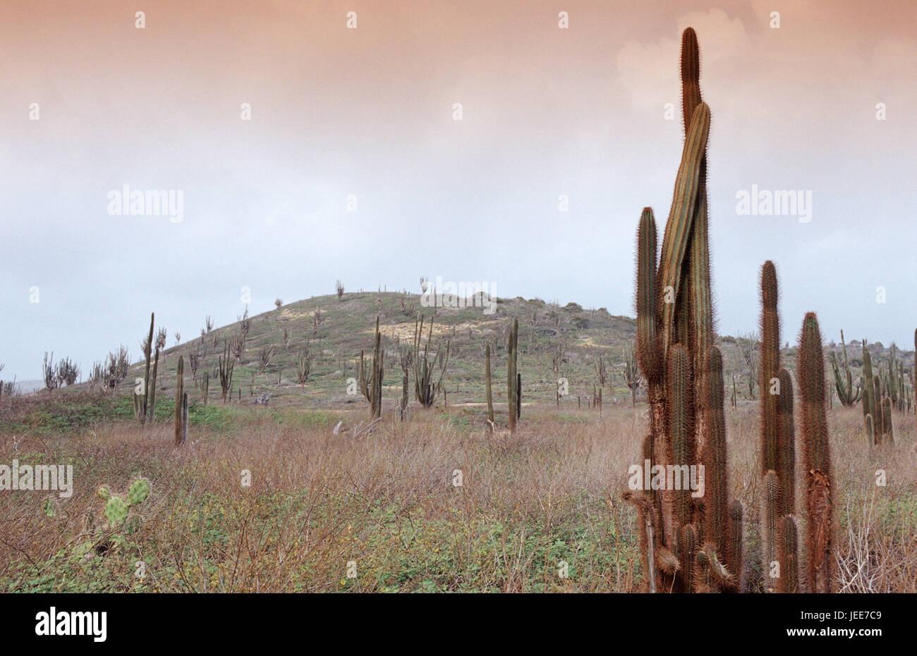 Vegetation, cacti, the Caribbean, voucher airs, - Stock Image