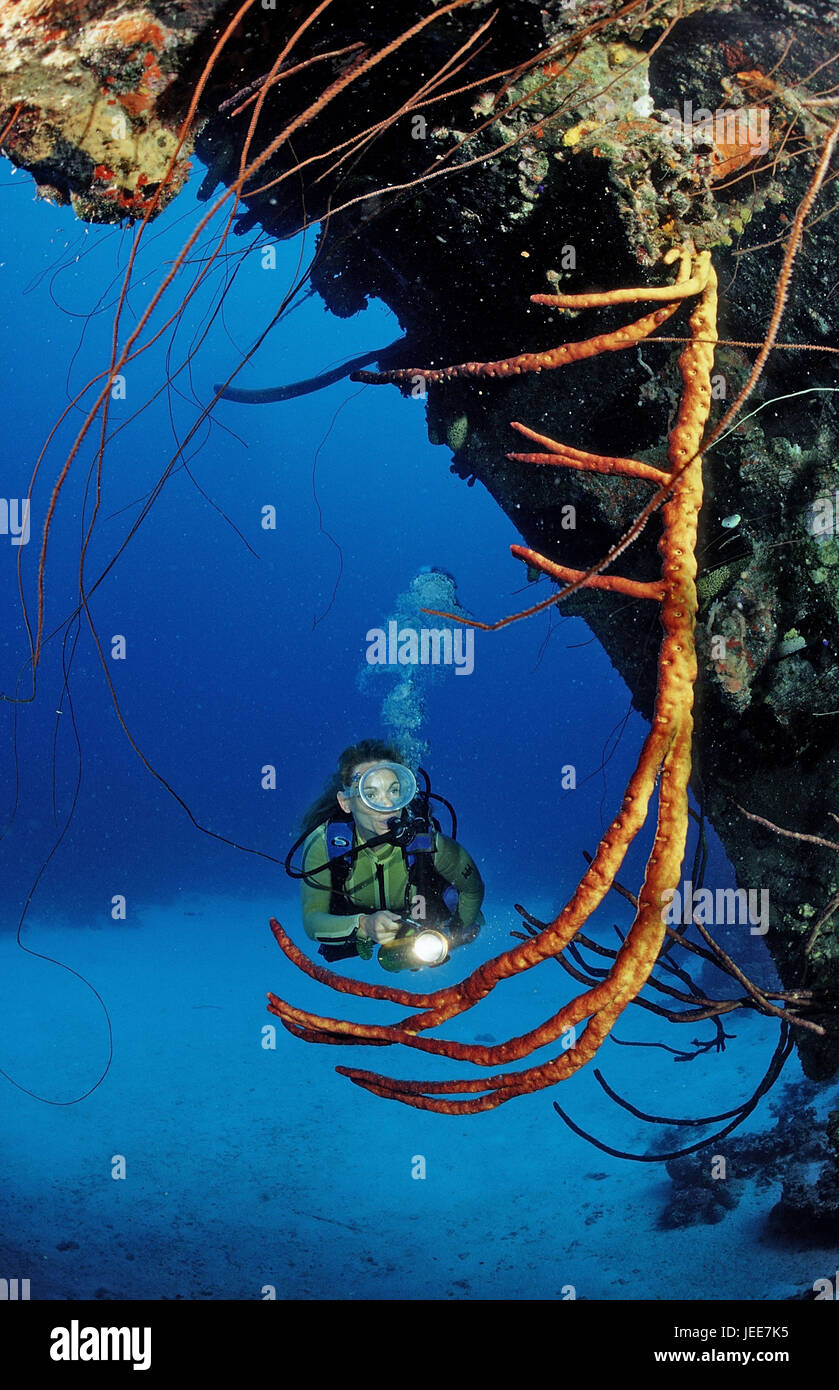 Diver, ship wreck 'Hilma of Hooker', the Caribbean, Stock Photo