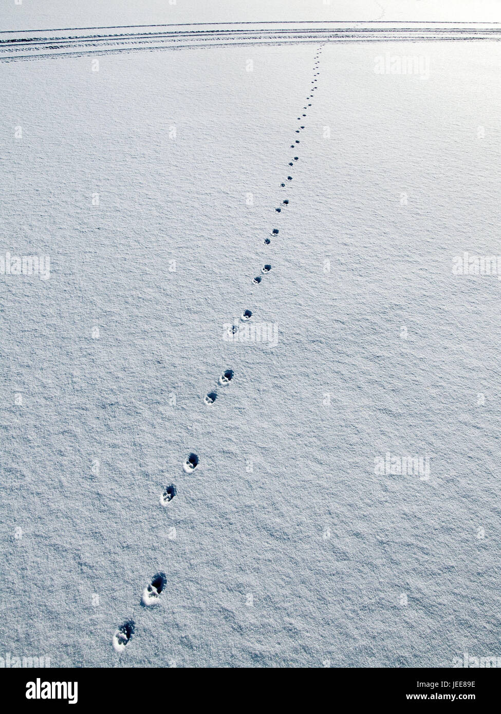 Snow surface, animal tracks, snow, impressions, track, animal, paws, paw impressions, snow caps, deserted, exit, - Stock Image