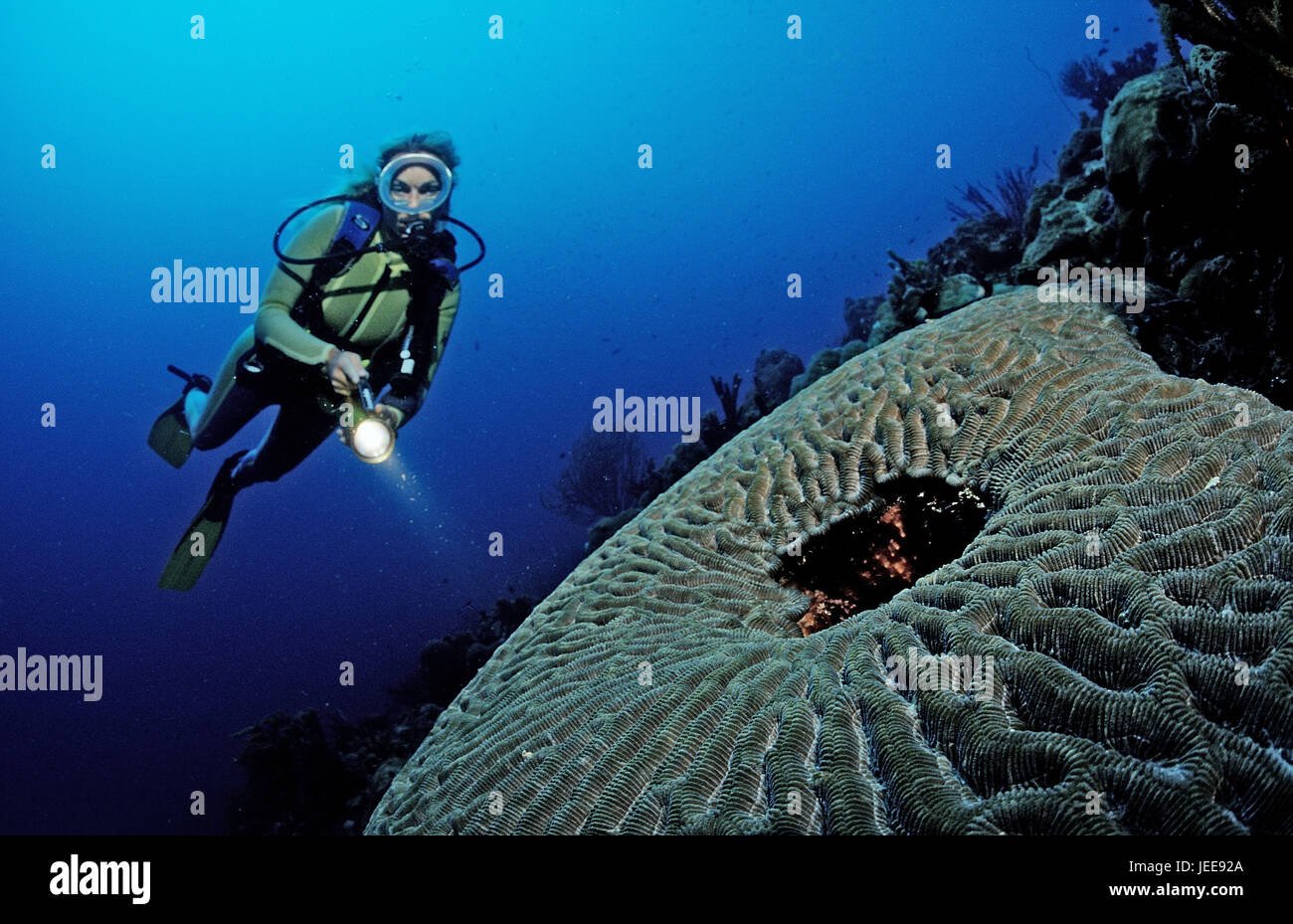 Diver, coral reef, Saint Lucia, the Caribbean, Stock Photo