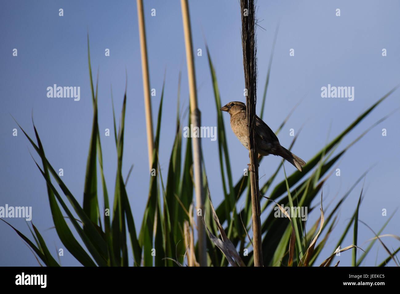 Wild bird amongst green leaves - Stock Image