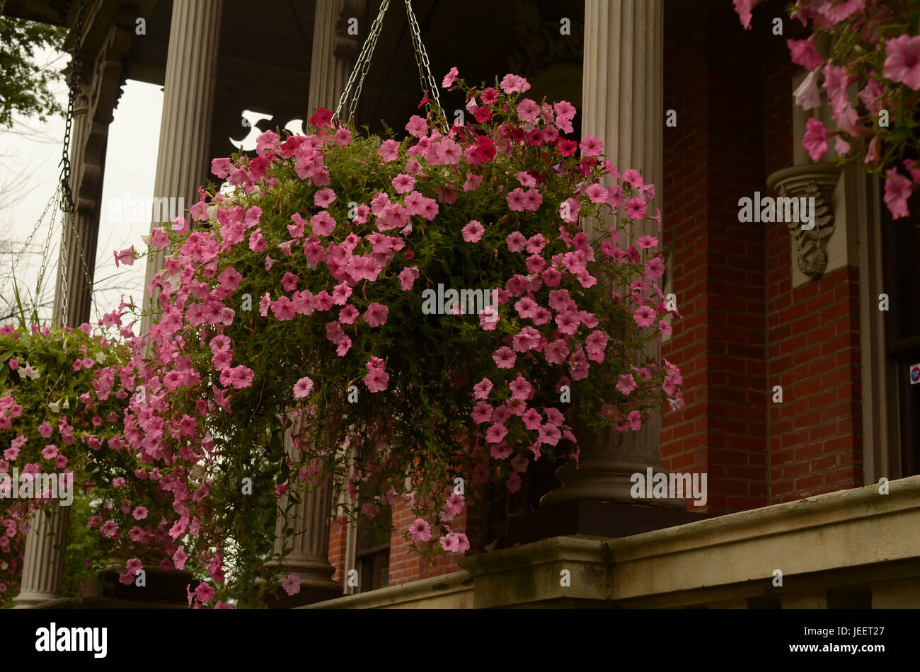 pink hanging flowers on porch old building from 1874 stock photo