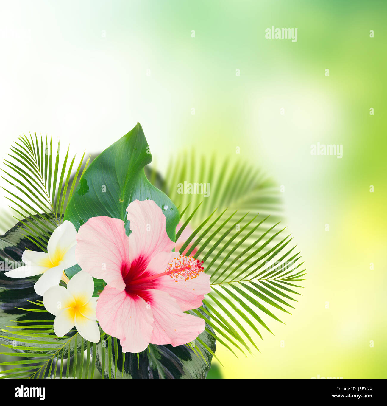 Tropical Fresh Flowers And Leaves Fresh Hibiscus And Frangipani
