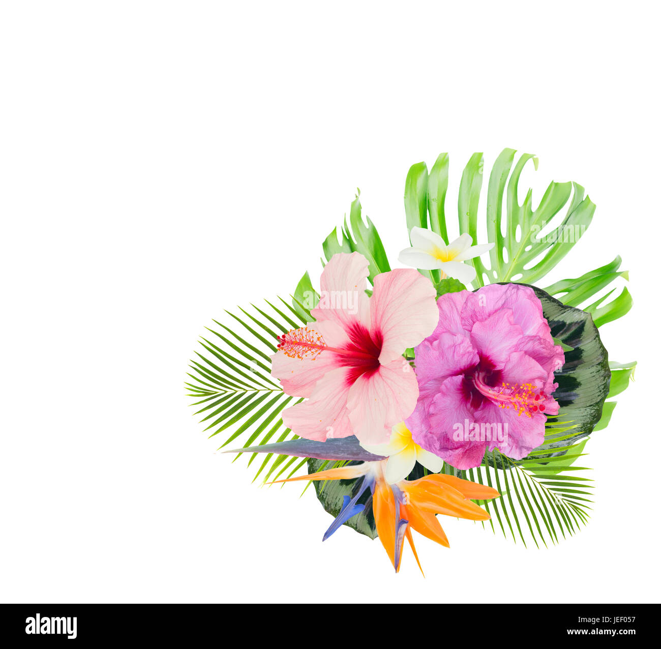 Tropical Flowers And Leaves Fresh Hibiscus Bird Of Paradize And