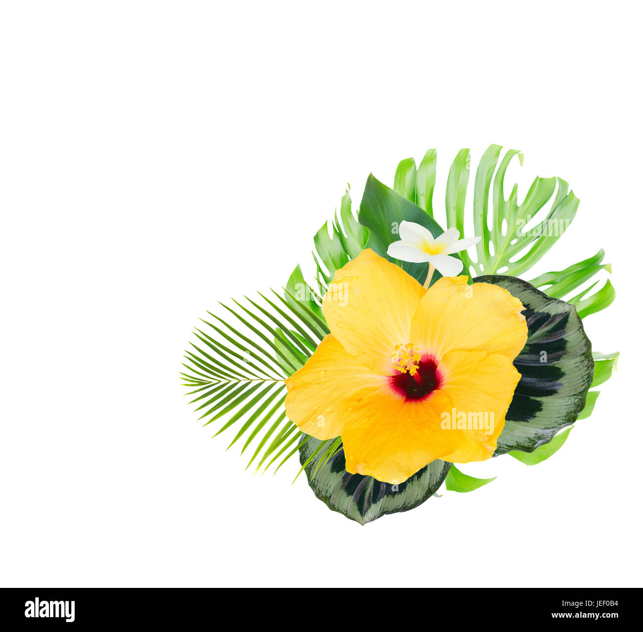 Tropical Flowers And Leaves Fresh Yellow Hibiscus And White Stock