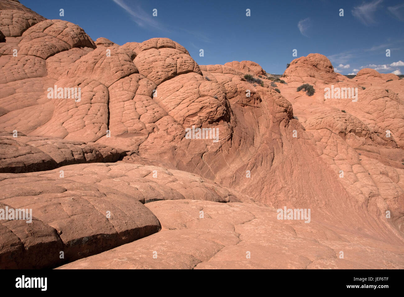 'Edmaiers Secret are fields of so-called Brainrocks; they lie in the Vermilion Cliffs Wilderness, Utah, the - Stock Image