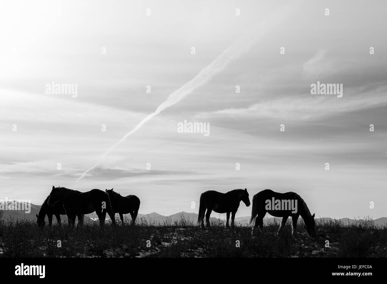Some horses silhouettes on top of a mountain, beneath a spacious sky with soft clouds - Stock Image