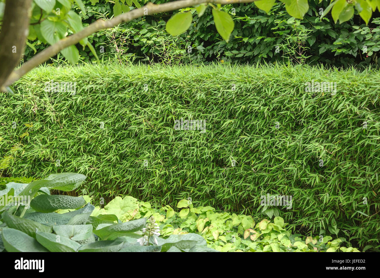 Bambus Hecke Stock Photos Bambus Hecke Stock Images Alamy