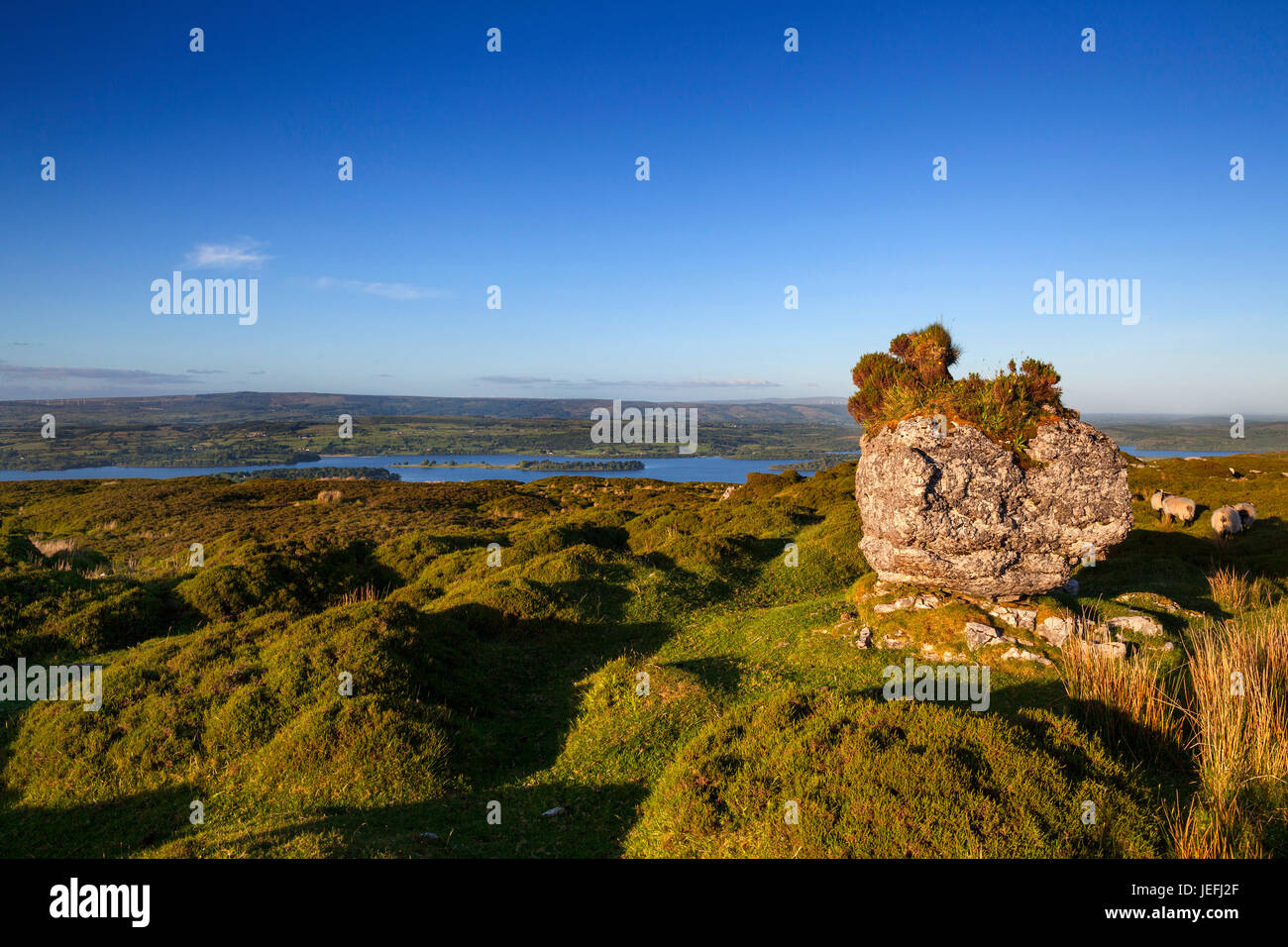 The mountain countryside with sheep at  Carrowkeel situated above Lough Arrow in the Bricklieve Mountains in County - Stock Image