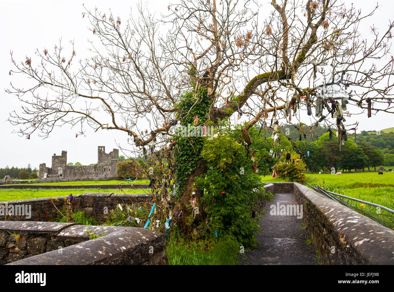Tree with various faith offerings at 15th century Benedictine Fore Abbey ruin, situated to the north of Lough Lene - Stock Image