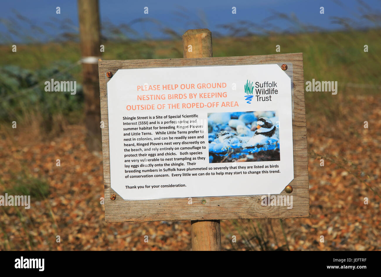 Suffolk Wildlife Trust sign about roped off nesting sites for birds, Shingle Street, Suffolk, England, UK Stock Photo