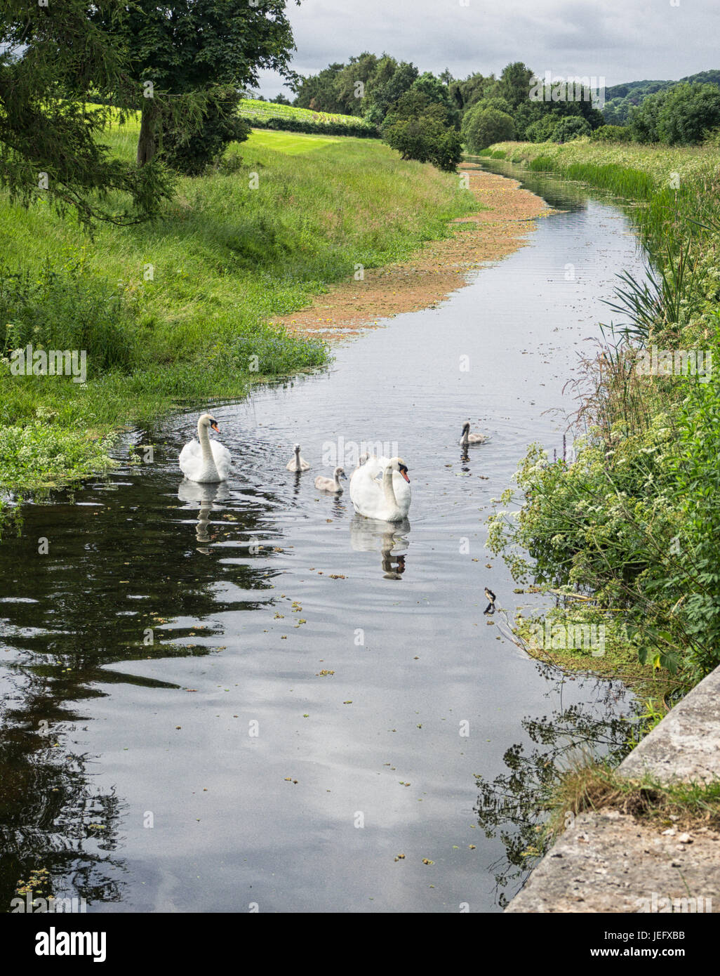 A canal and towpath - Stock Image
