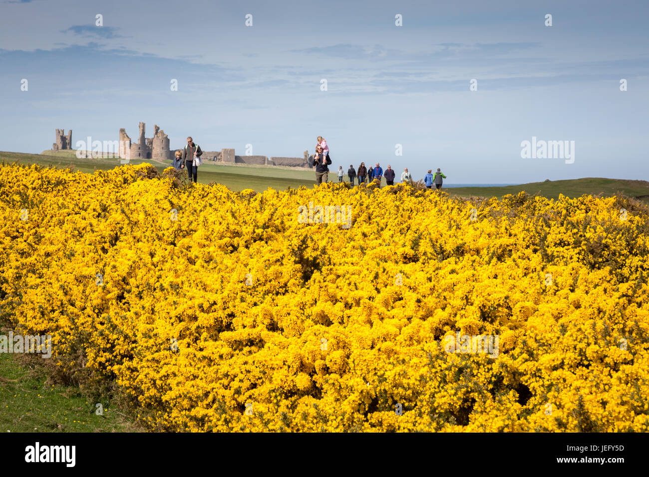 Dunstanburgh Castle, Northumberland, England, UK, Europe. - Stock Image