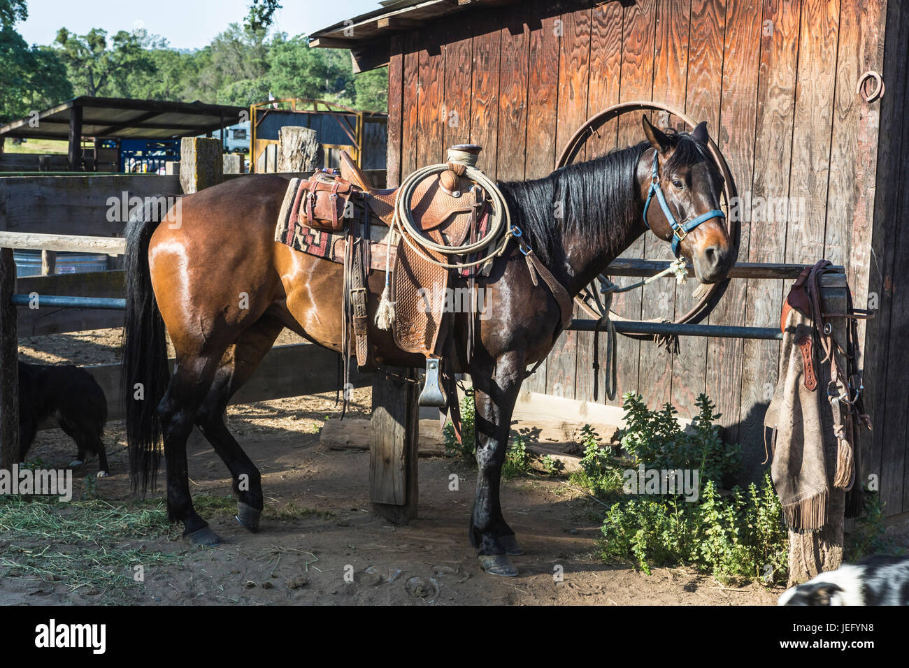 Western Horse Tied At Hitching Post At Barn On Ranch Stock Photo Alamy