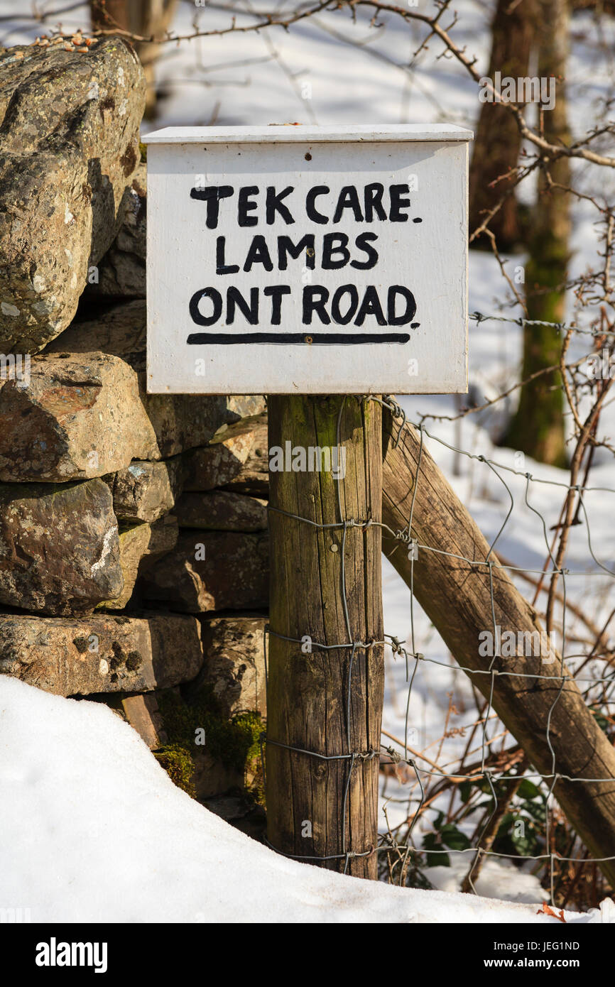 Tek Care Lambs Ont Road.  A sign written in a north of England dialect asking motorists to take care of new born - Stock Image