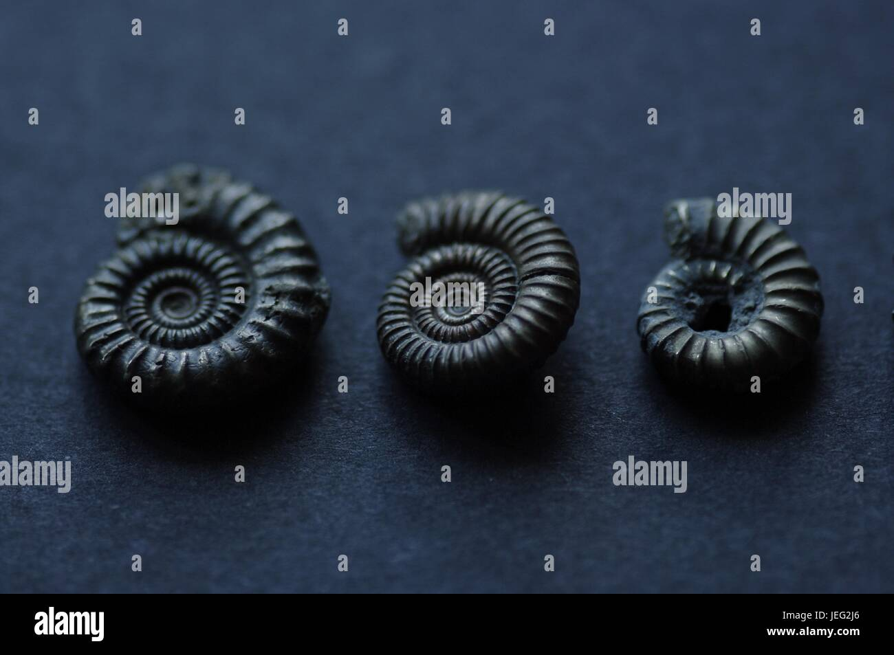 Three Pyrite Ammonite Fossils from Charmouth Beach, Devon, UK. June, 2017. Macro Photo. - Stock Image