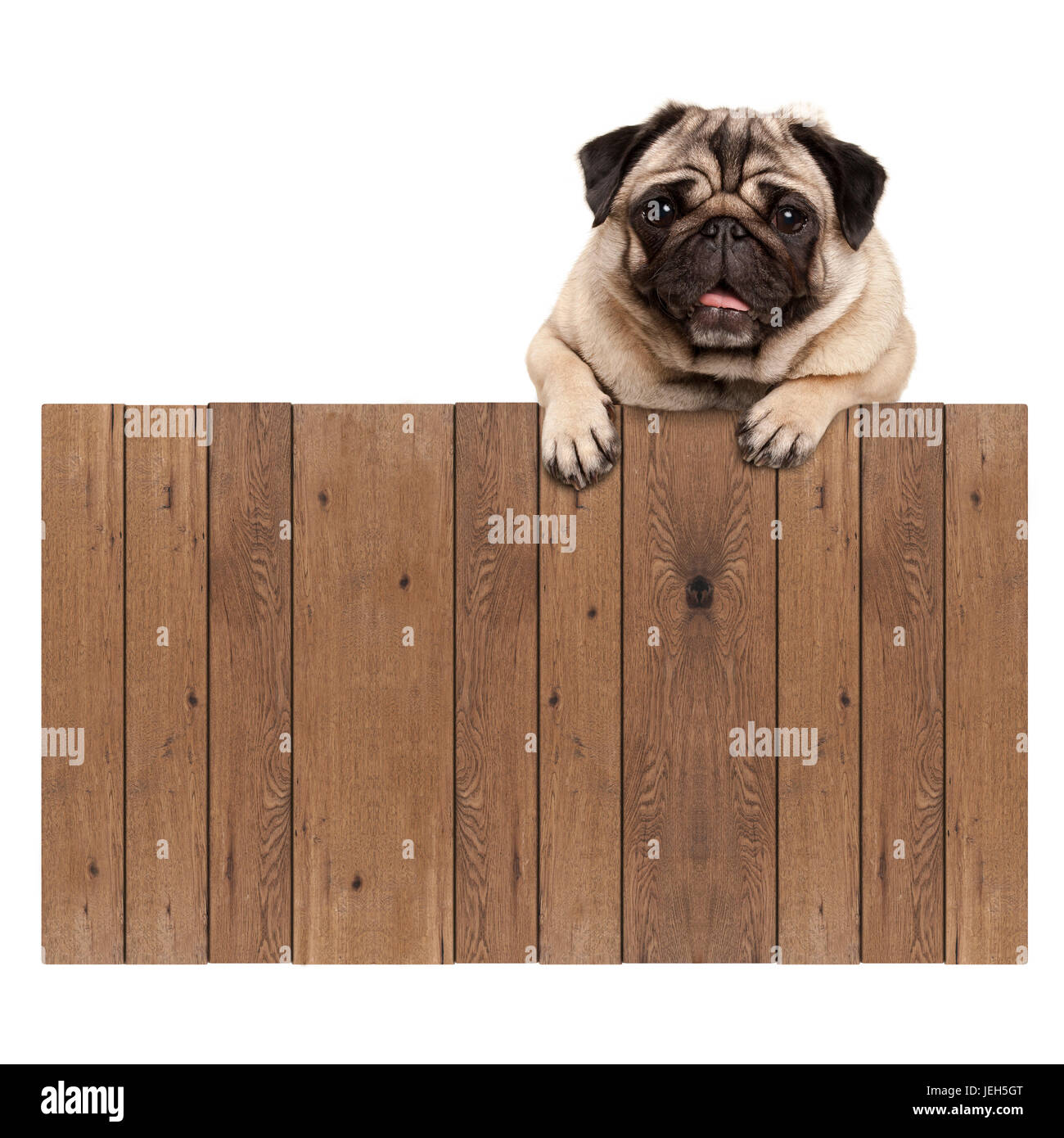 pug paws cute pug puppy dog hanging with paws on blank wooden fence 8657
