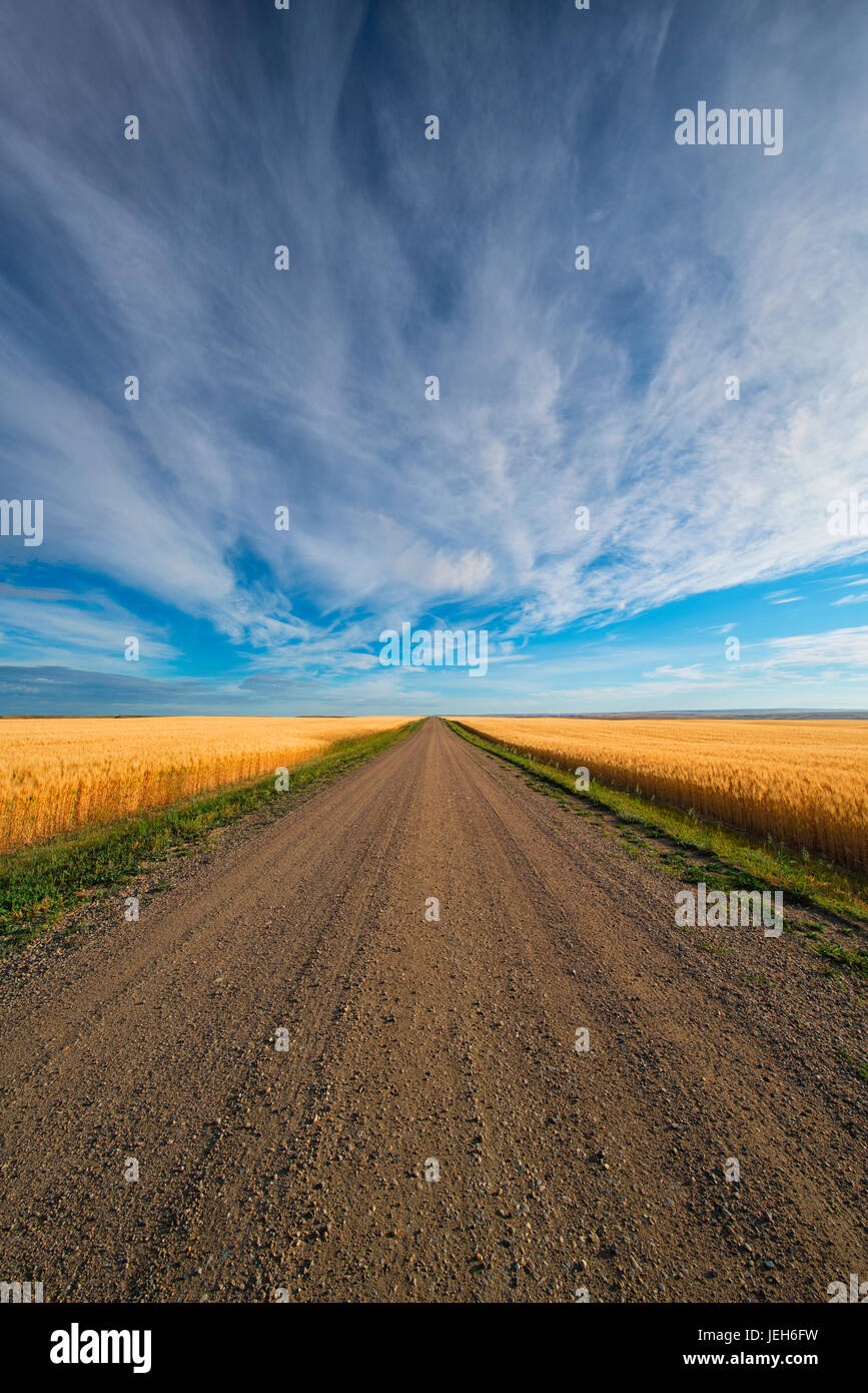 A gravel road that heads through Canada's prairies in rural Saskatchewan; Val Marie, Saskatchewan, Canada - Stock Image