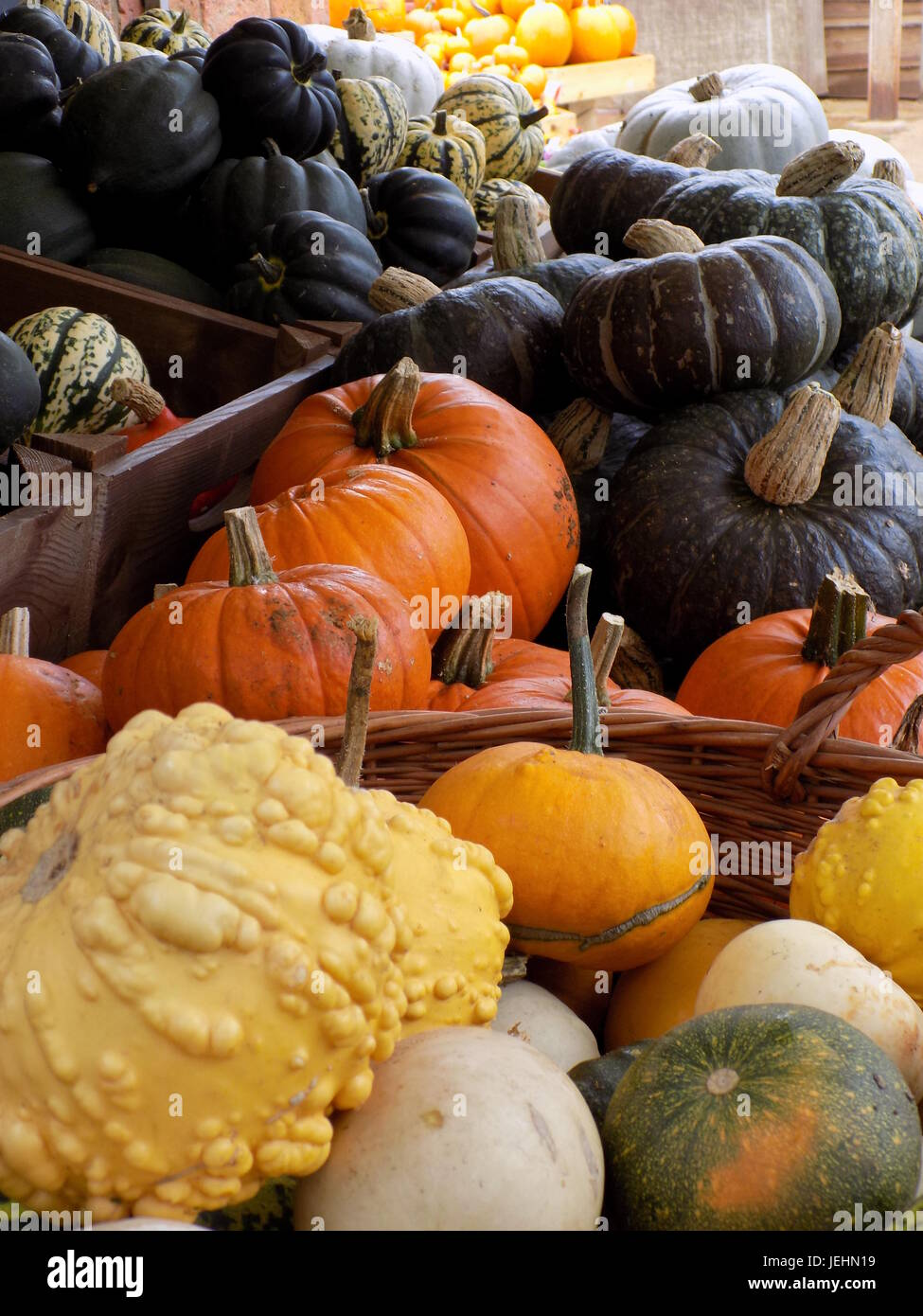 Pumpkins, gourds and squash piled up in Autumn Stock Photo