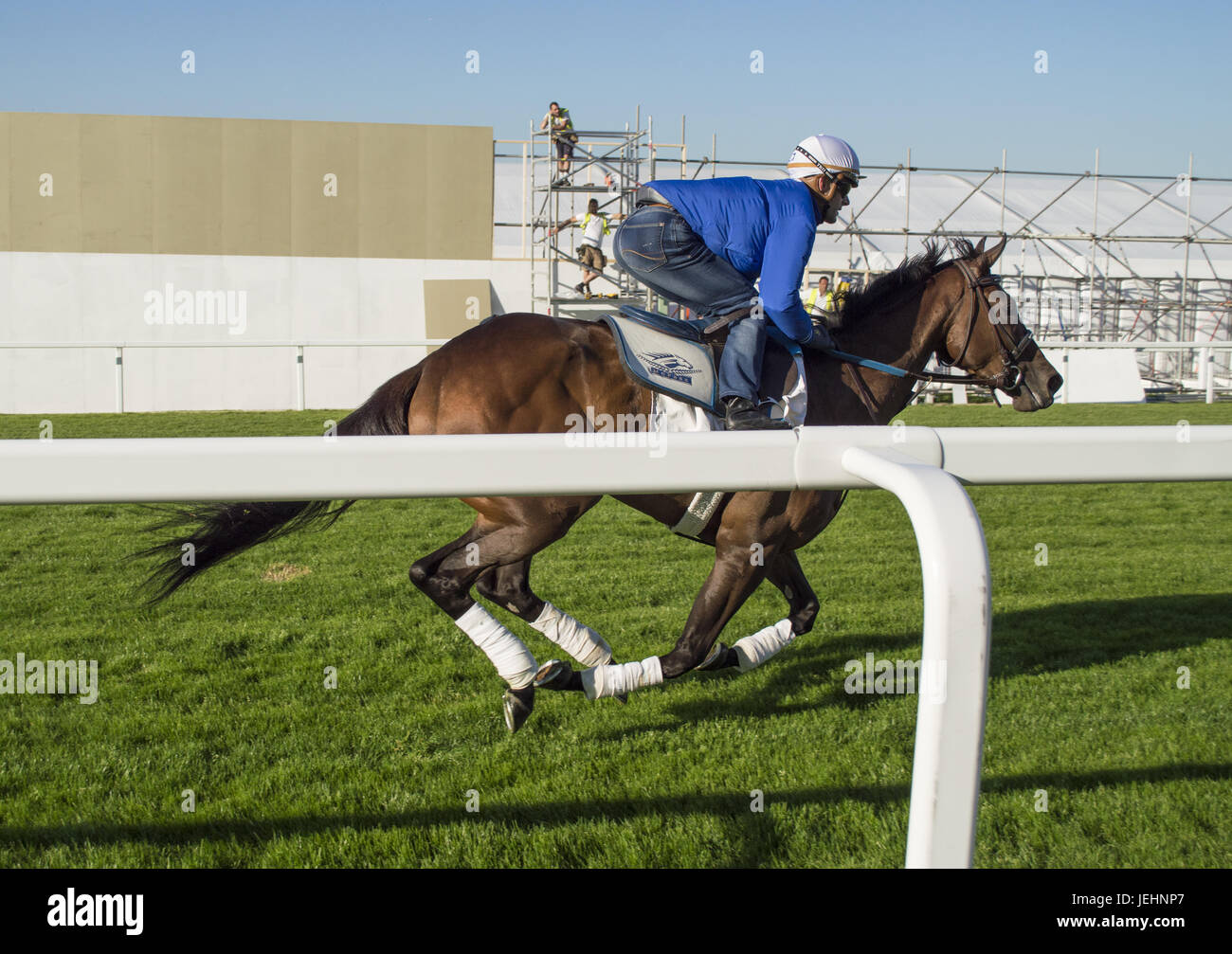 Trainer Kenny McPeek puts Investec Oaks contender racehorse 'Daddys Lil Darling' through her paces on the Epsom Downs racecourse track.  Featuring: Daddys Lil Darling, Olivier Peslier Where: Epsom, United Kingdom When: 26 May 2017 Stock Photo