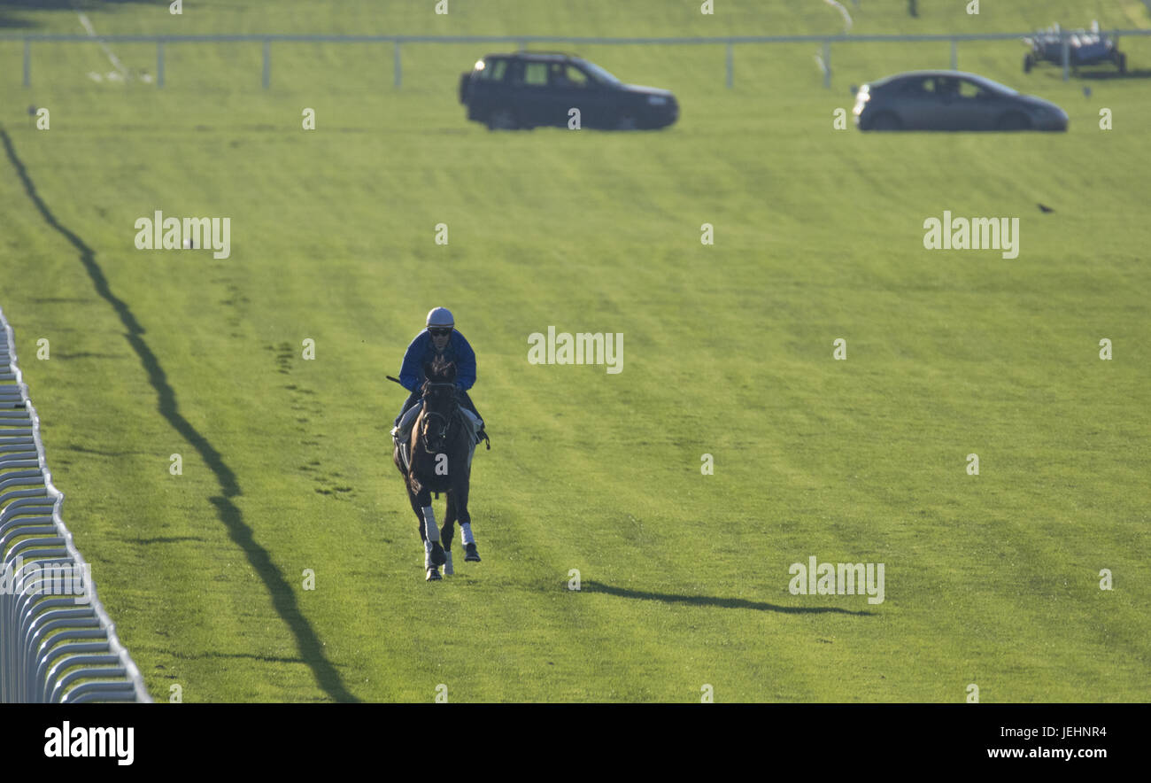 Trainer Kenny McPeek puts Investec Oaks contender racehorse 'Daddys Lil Darling' through her paces on the Epsom Downs racecourse track.  Featuring: Atmosphere, Olivier Peslier, Daddys Lil Darling Where: Epsom, United Kingdom When: 26 May 2017 Stock Photo