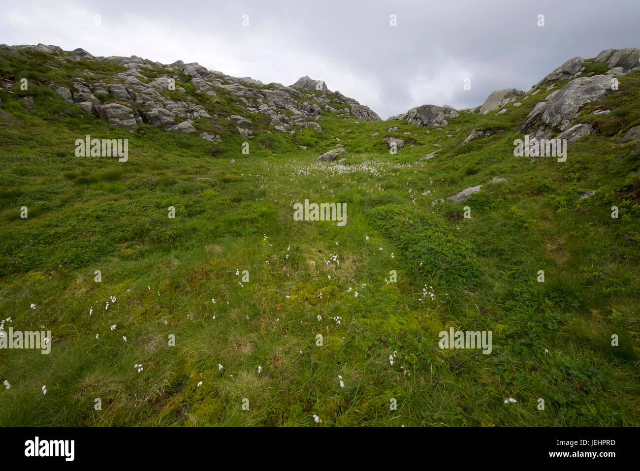 A small meadow atop Ulriken mountain above Bergen, Norway. This area is known for great hiking and scrambling. - Stock Image