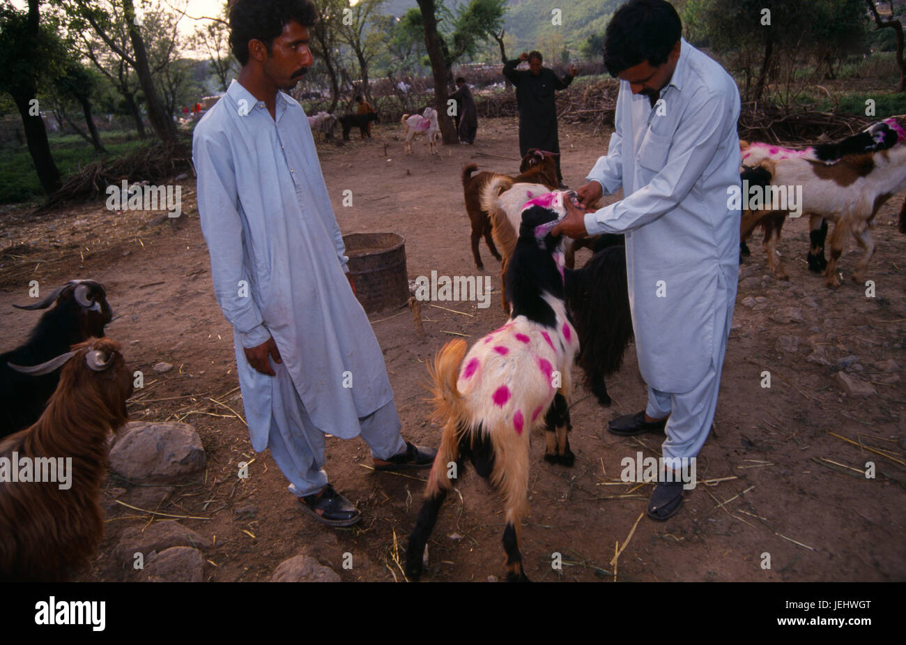 Market Islamabad Pakistan Stock Photos & Market Islamabad Pakistan
