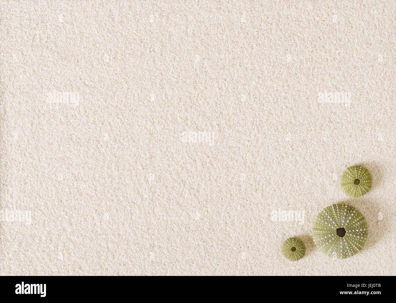 Three green sea urchin shells on flat white sand surface. Sea hedgehogs with globular endoskeletons. Psammechinus - Stock Image