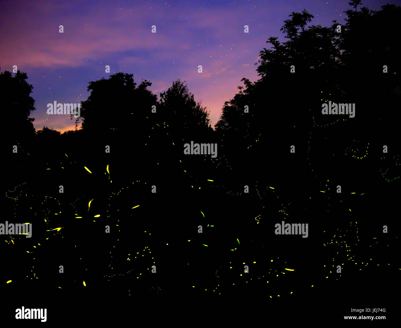 Firefly trails at night, Italy. - Stock Image