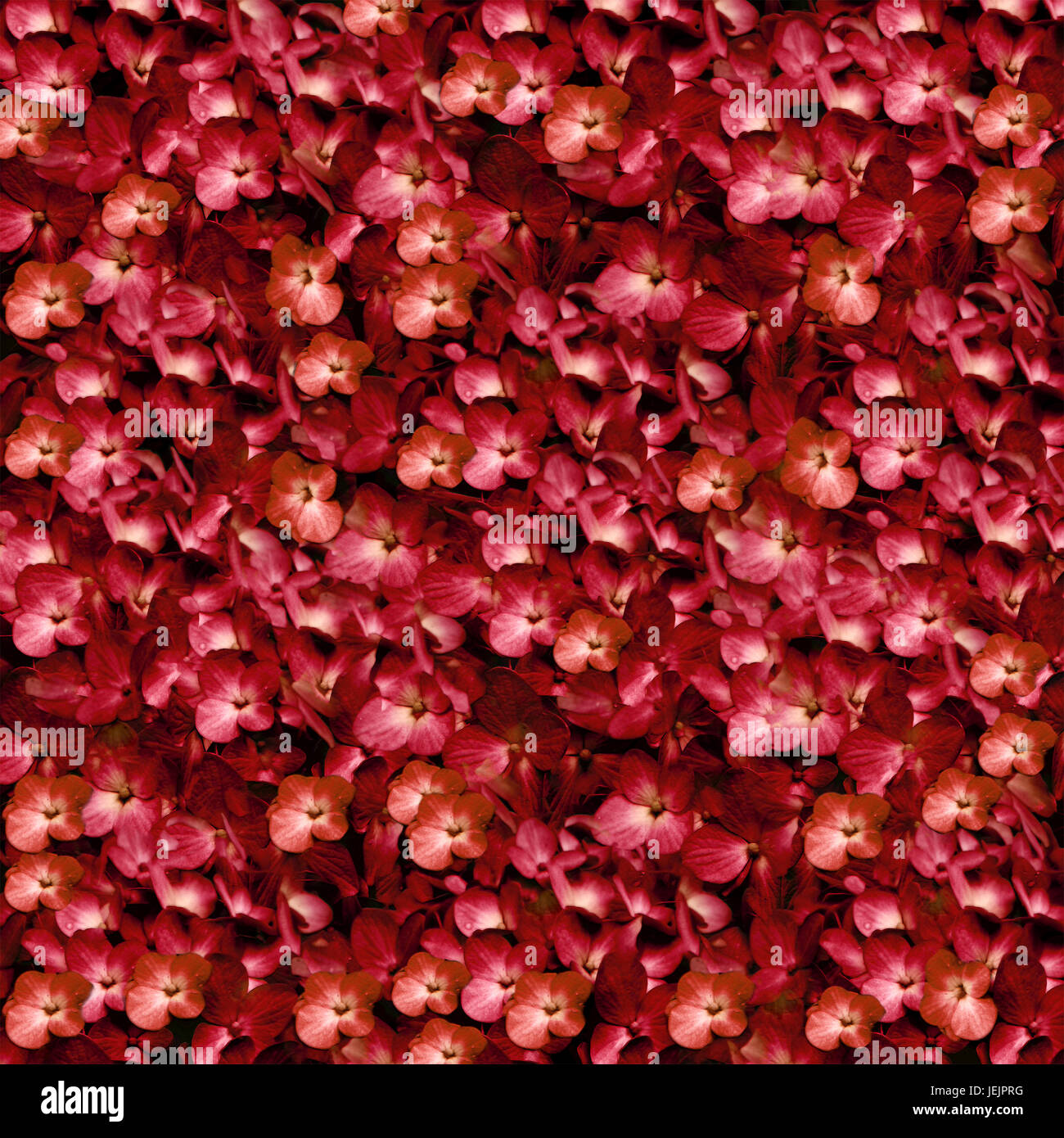 Flowers Pattern Collage in Warm Tones - Stock Image