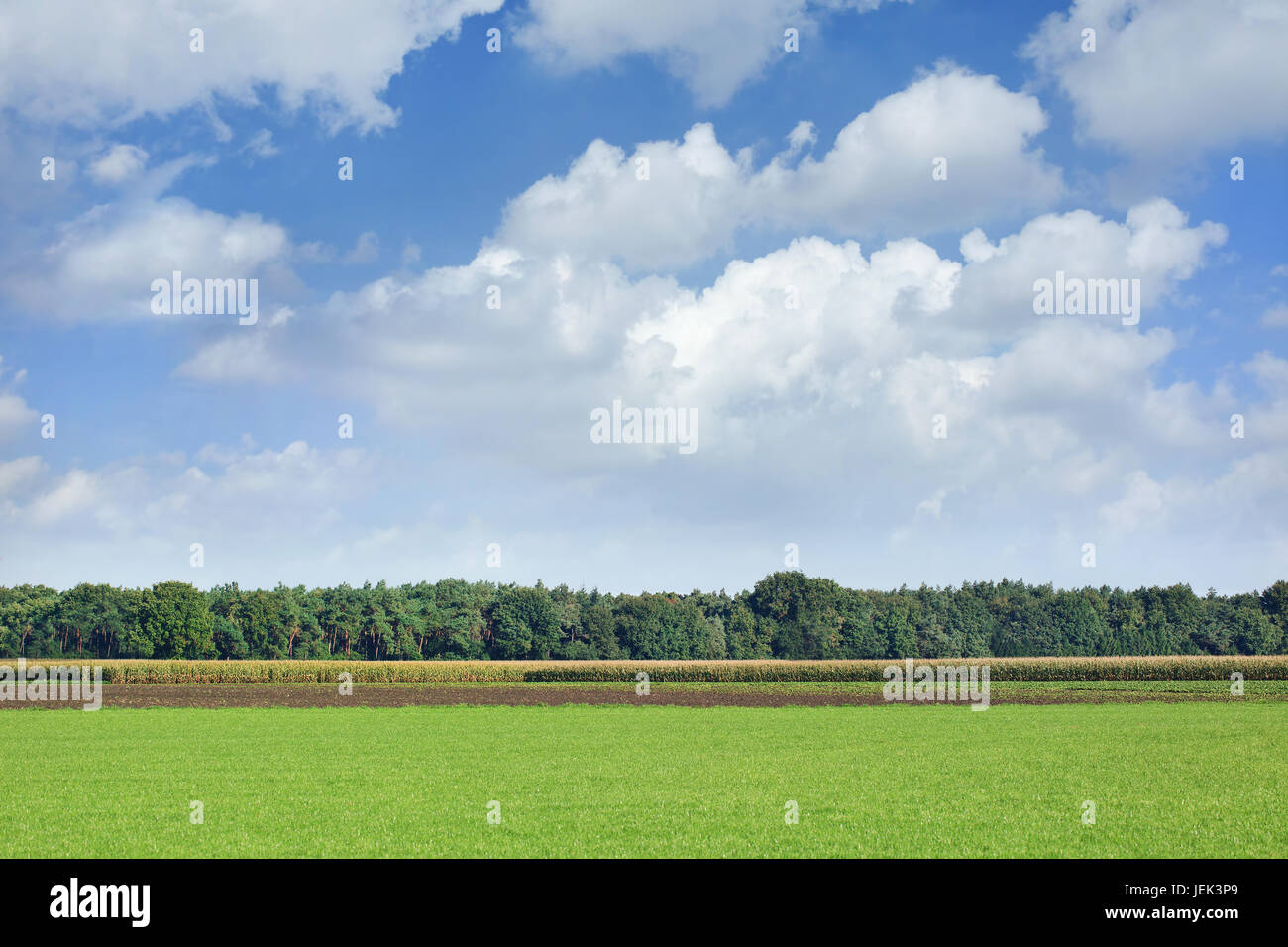 Landscape in agricultural area with dramatic clouds, The Netherlands - Stock Image