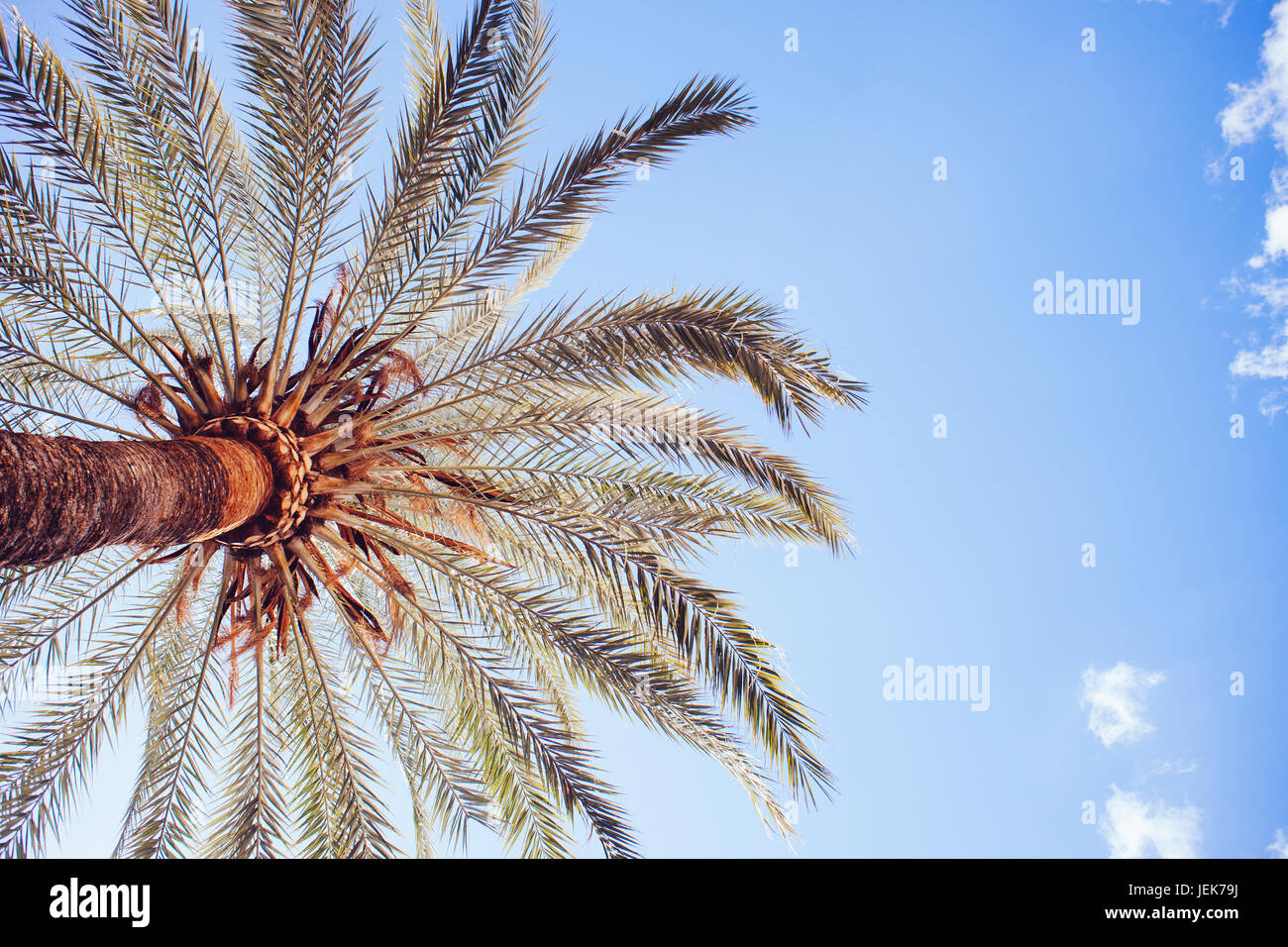 palm tree from below with a nice blue sky - Stock Image