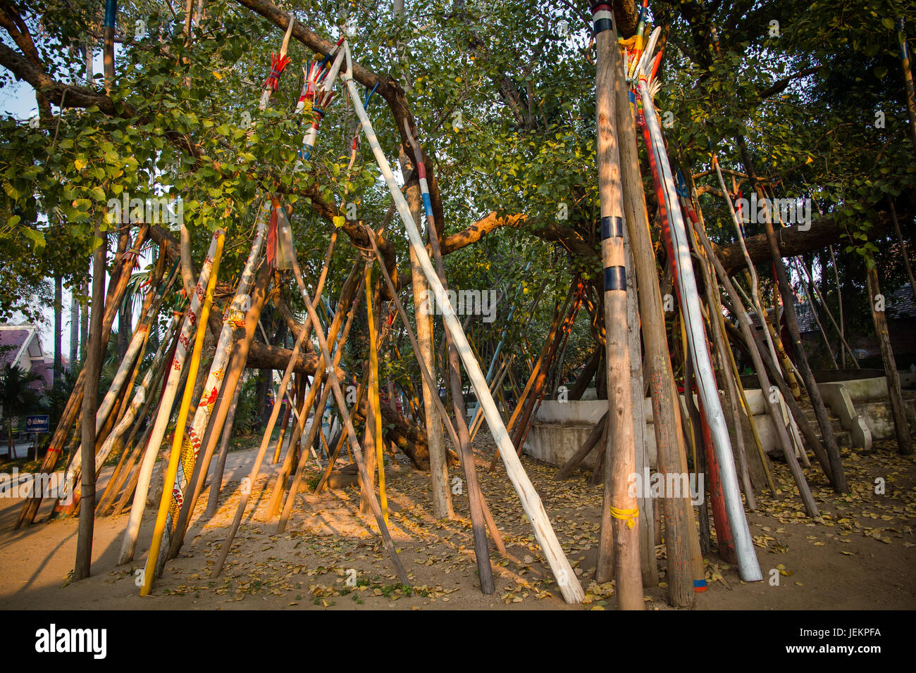Believer of Norhtern people of Thailand, stick support the old tree for long life. - Stock Image
